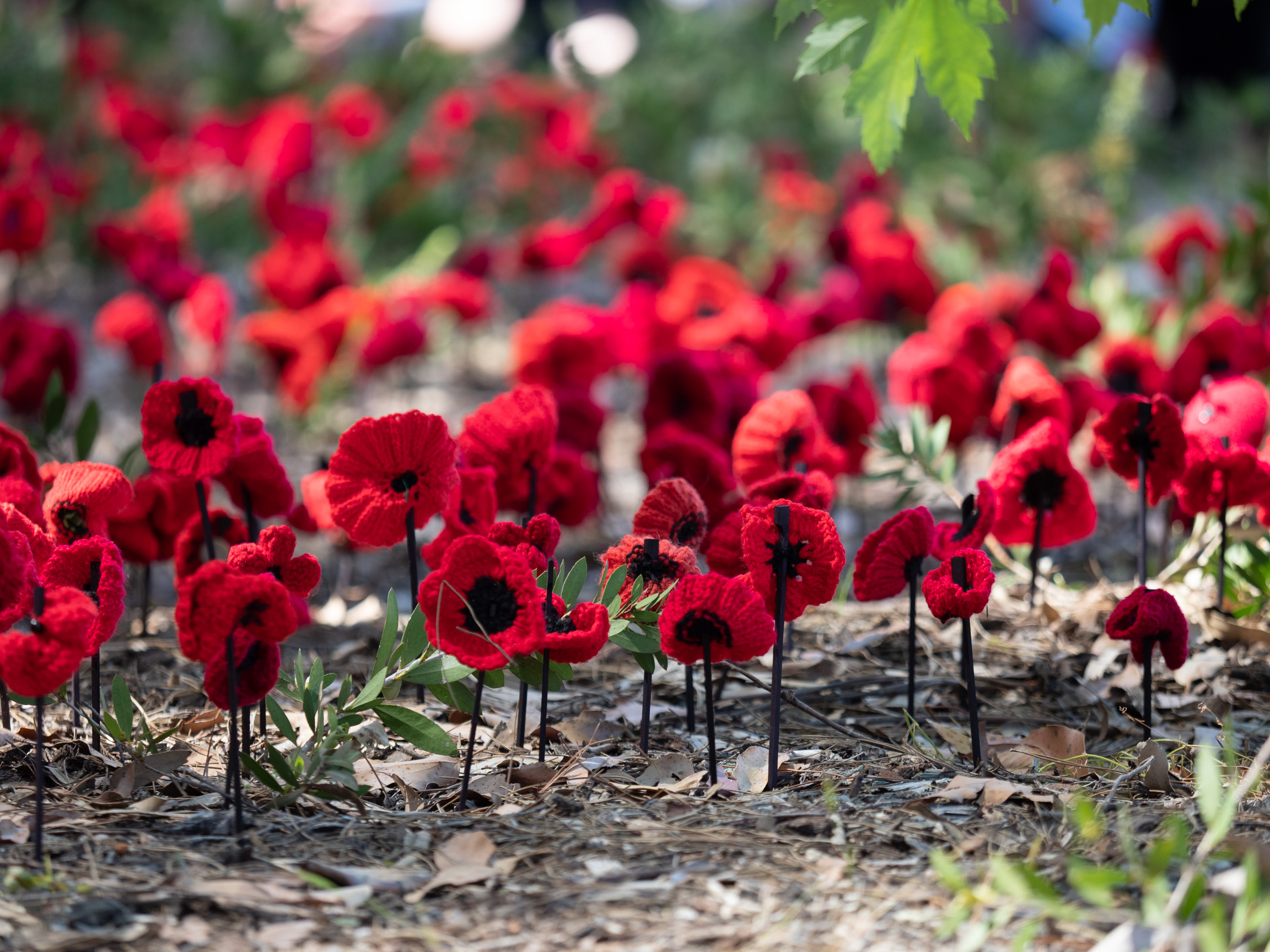 remembrance-PB117604