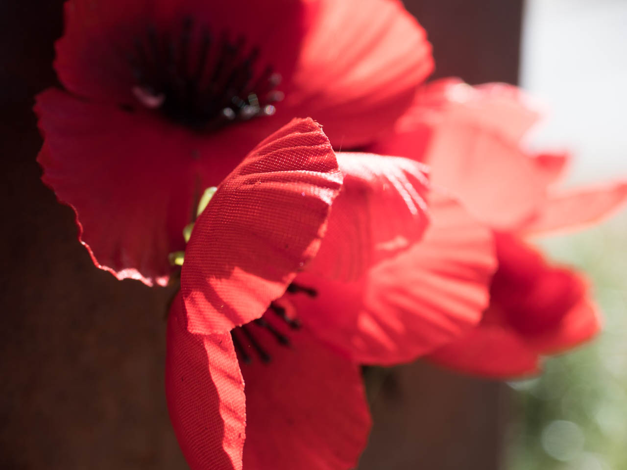 remembrance-PB113556