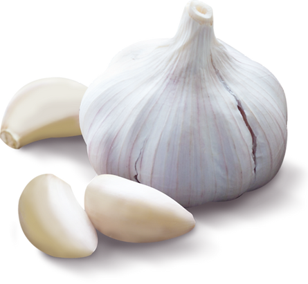 Garlic_alone_small_7dcd8e42-e3e1-486b-8b