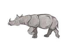 Rhino Experiment