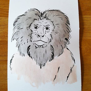 Day 6 Black-faced Lion Tamarin