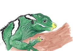 Iguana Experiment