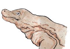 Salamander Experiment
