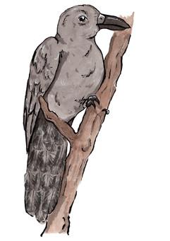 Mariana Crow