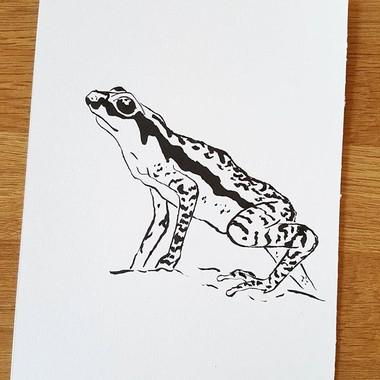 Day 21 Rancho Grande Harlequin Frog