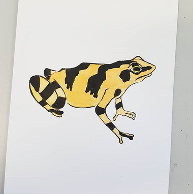 Day 16 Panamanian Golden Frog