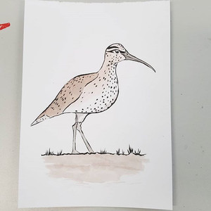 Day 27 Slender Billed Curlew