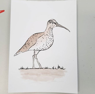 Day 27 Slender Billed Curlew