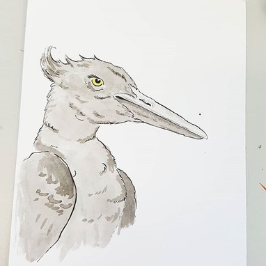 Day 15 Imperial Woodpecker