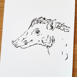 Day 19 Visayan Warty Pig