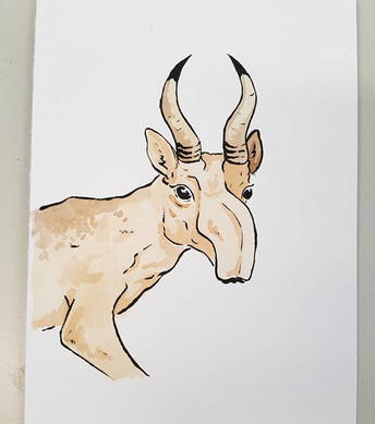 Day 29 Saiga Antelope
