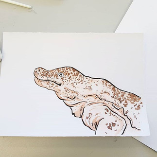 Day 25 Chinese Giant Salamander