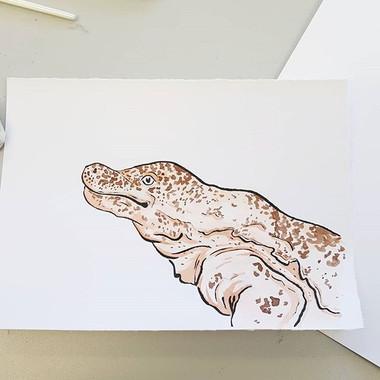 Day 25 Chinese Giant Salamander