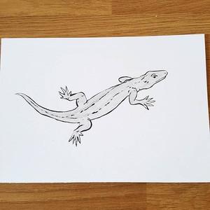Day 18 Aeolin Wall Lizard