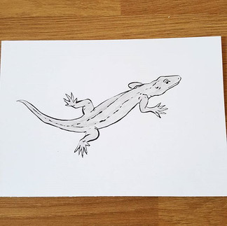 Day 18 Aeolin Wall Lizard