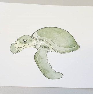 Day 11 Kemp's Ridley Turtle