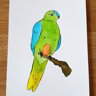 Day 17 Orange-bellied Parrot