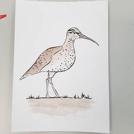 Slender Billed Curlew