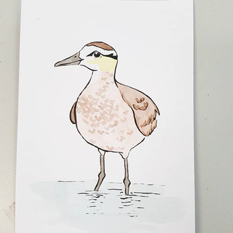 Day 28 Sociable Lapwing