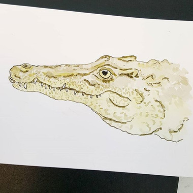 Day 2 Cuban Crocodile