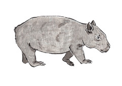 Wombat Experiment