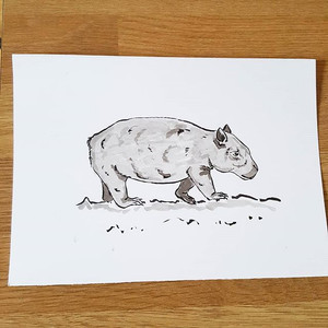 Day 14 Northern Hairy Nosed Wombat