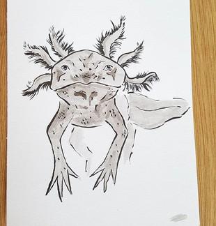 Day 7 Axolotl