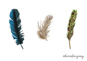 Feather study
