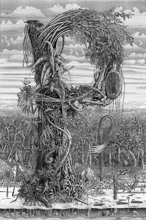 Р - Рисунки разрезов растений