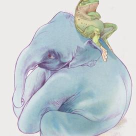 Frogs & Elephants