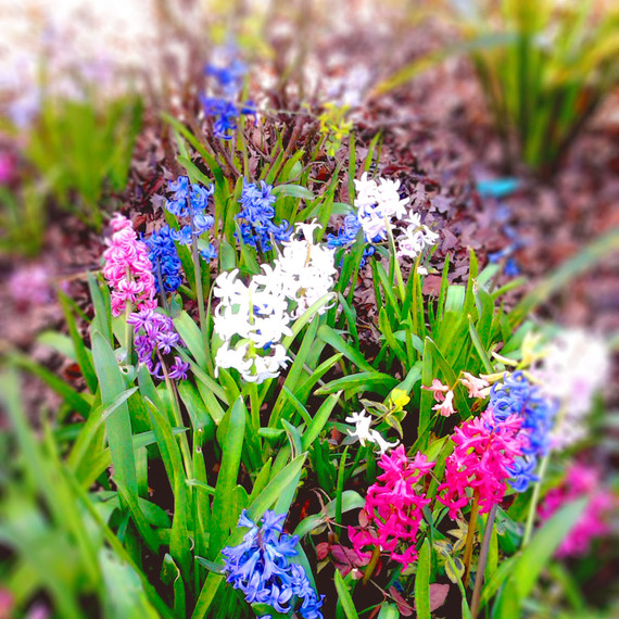 Pink, blue and white flowers