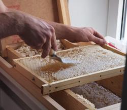 Retirada manual do mel no favo