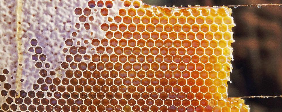 Bee Mel, favos de mel, Piauí. Mel de abelhas de floradas nativas. Foto: Creative Commons