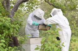Apicultores, mel, no Piauí - Bee Mel