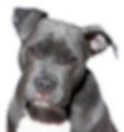 dog-2438803_1920.png