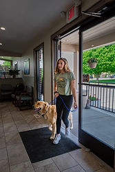 Golden retriever being walked into clinic