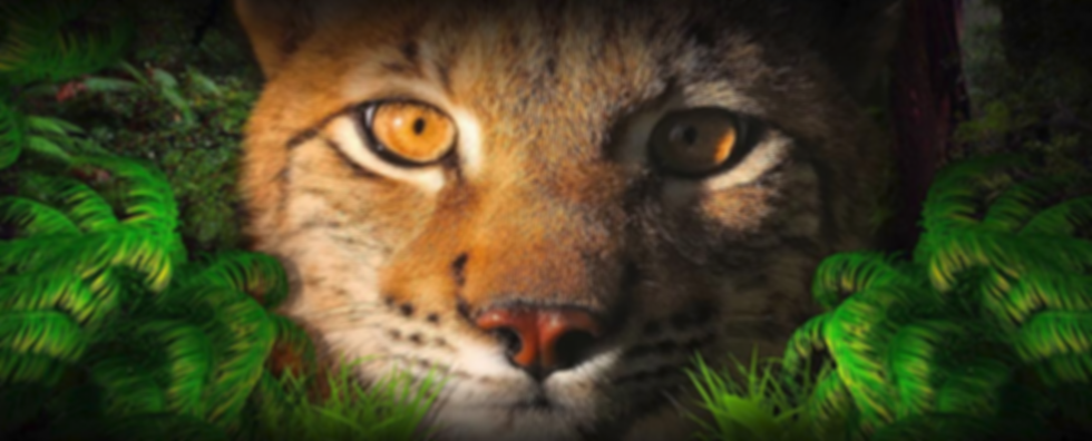 Wildlife Rockstars Front Page Banner.png