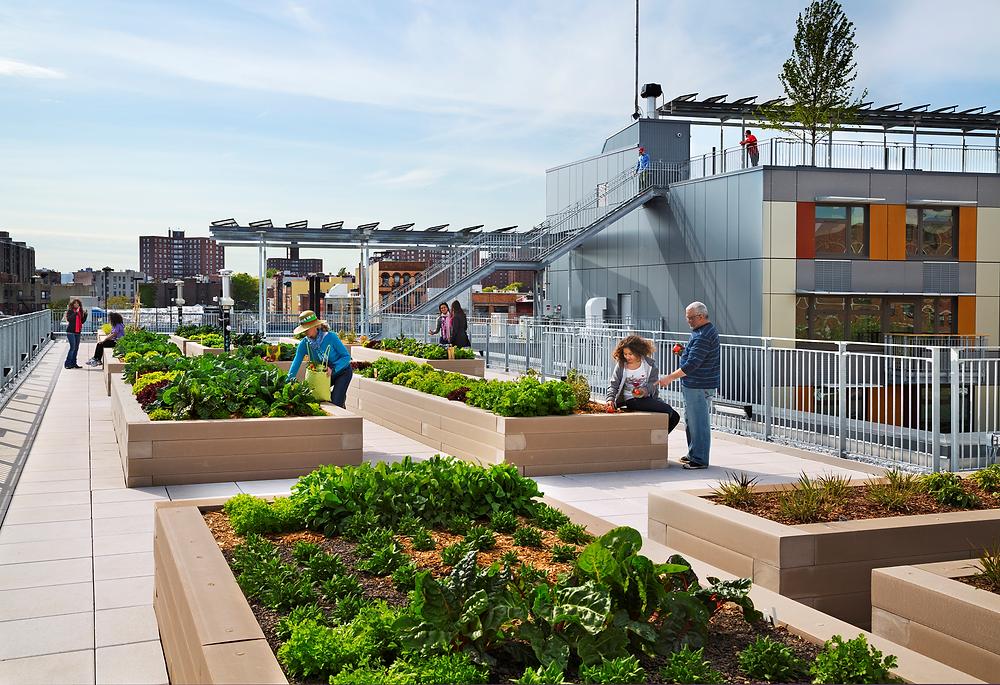 rooftop urban community garden