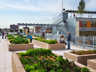 Urban Gardens in Modern Architecture