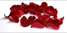 pétales de roses.jpg