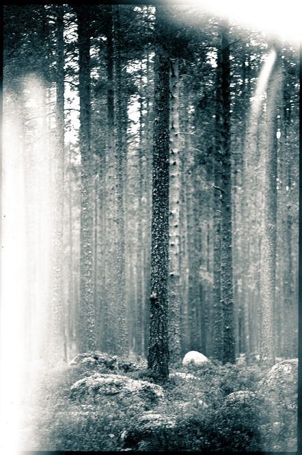 thetree#2.jpg