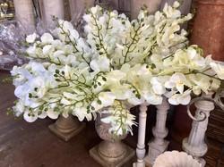 פרחים יבשים סחלבים