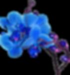 Patientdatalagen Blomma