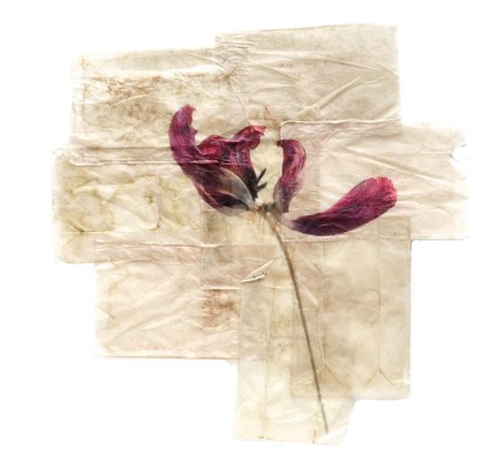 tea tulip1 copy.jpg