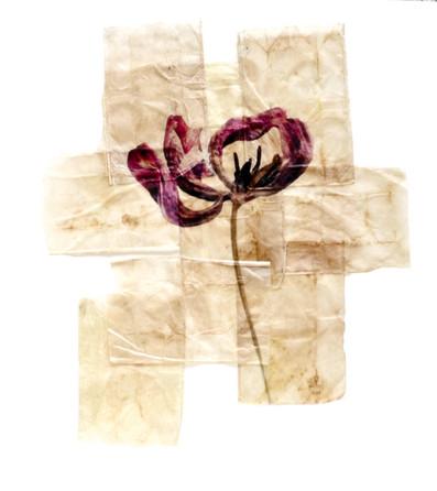 tea tulip2.jpg