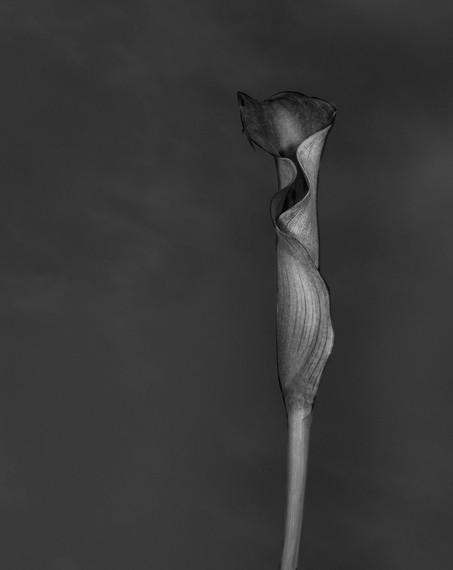 twirl 8 x 11.jpg