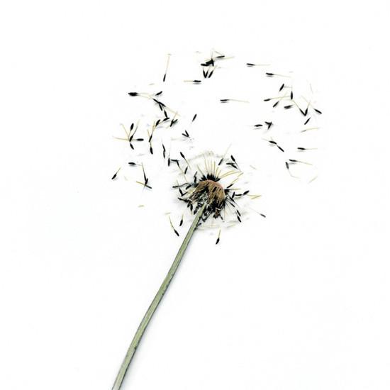 Make_a_Wish_7.jpg