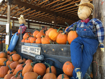 Fall Harvest at Apple Annie's Orchard in Wilcox Arizona USA