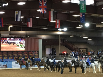 The Scottsdale Arabian Horse Show in Arizona