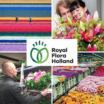 We loved the tour of the famous flower auction house  Royal FloraHolland in Aalsmeer, Netherlands -